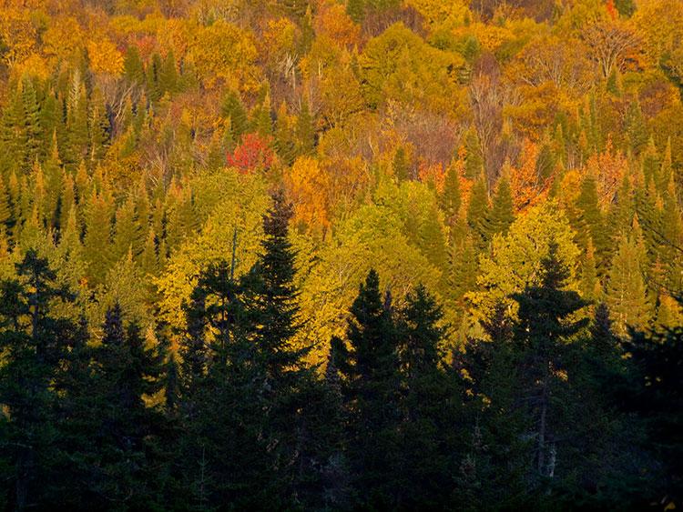 Image Guy Biechele-Autumn Contrasts