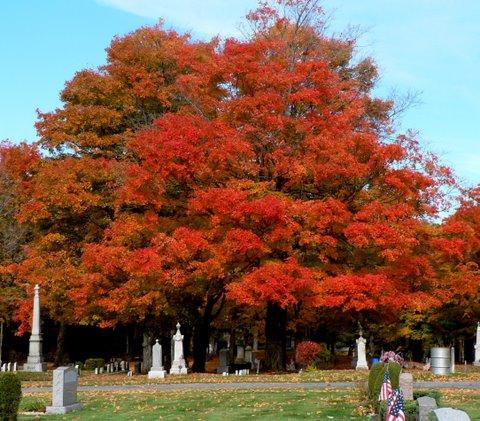 Image Grossman Autumn Splendor