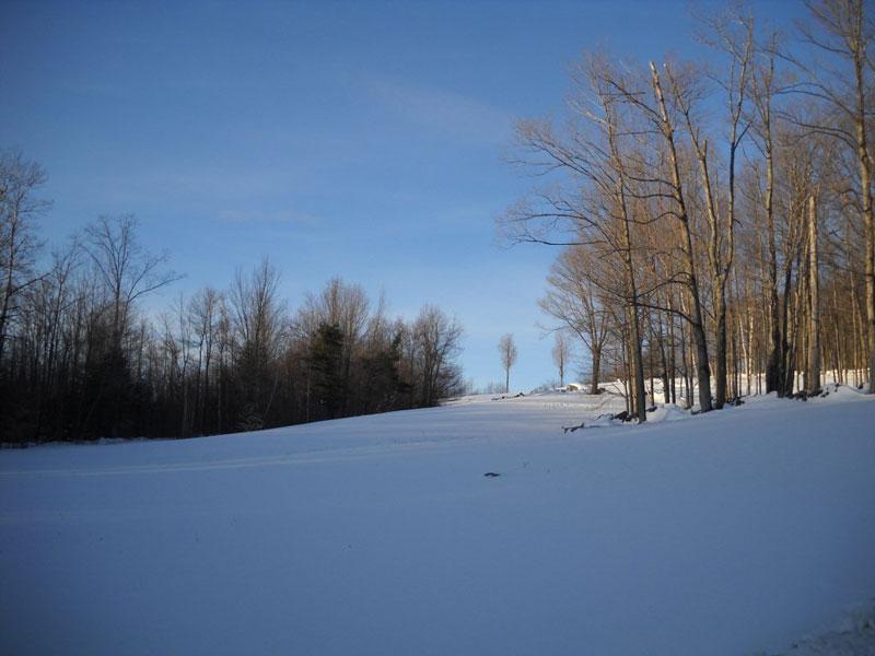 Image - Winter Trees photo
