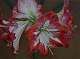 Image Gary Ruuska - Red & White