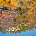 Liquid Color, Photography