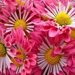 Pink, Ya Think?, Photography