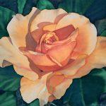 Gamboge Rose 1