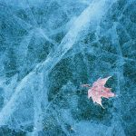 Maple Leaf in Ice