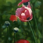 Lettuce Leaf Poppies 1