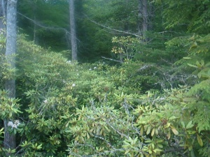 Plein-Air-RhododendronSP