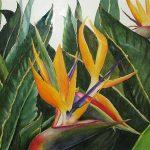 Bird of Paradise, Watercolor