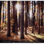 Dunn Park at Sunrise-Chris Guerra