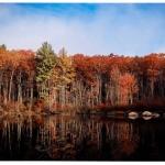 Dunn Park Reflections-Chris Guerra