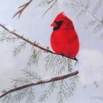 Notecard Cardinal Male-Carol Corliss