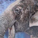 Notecard Elephant-Maryann Mullett