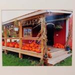 Pumpkins4Sale-Michael Pellegrini